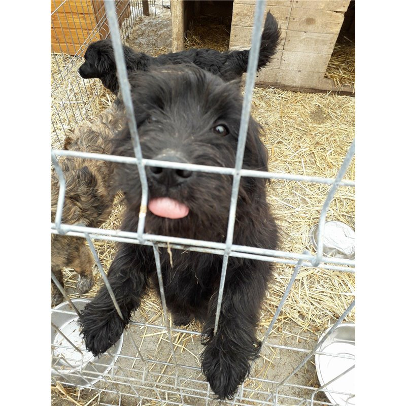 Cat Friendly Dogs For Adoption Uk