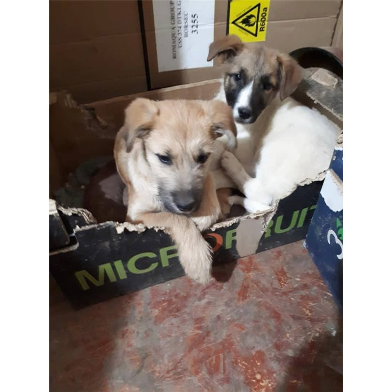 Disabled Rescue Dogs Uk