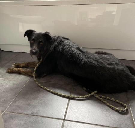 Dog for adoption Kitzi