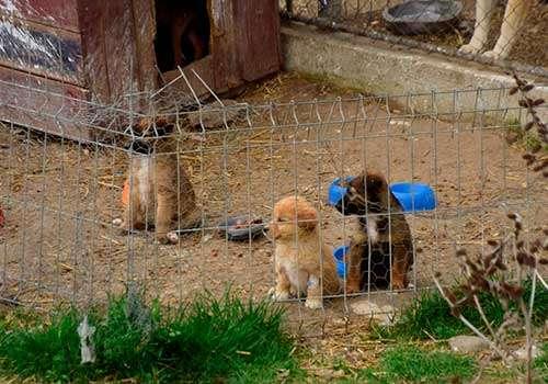 dog rescue fom the animal shelter