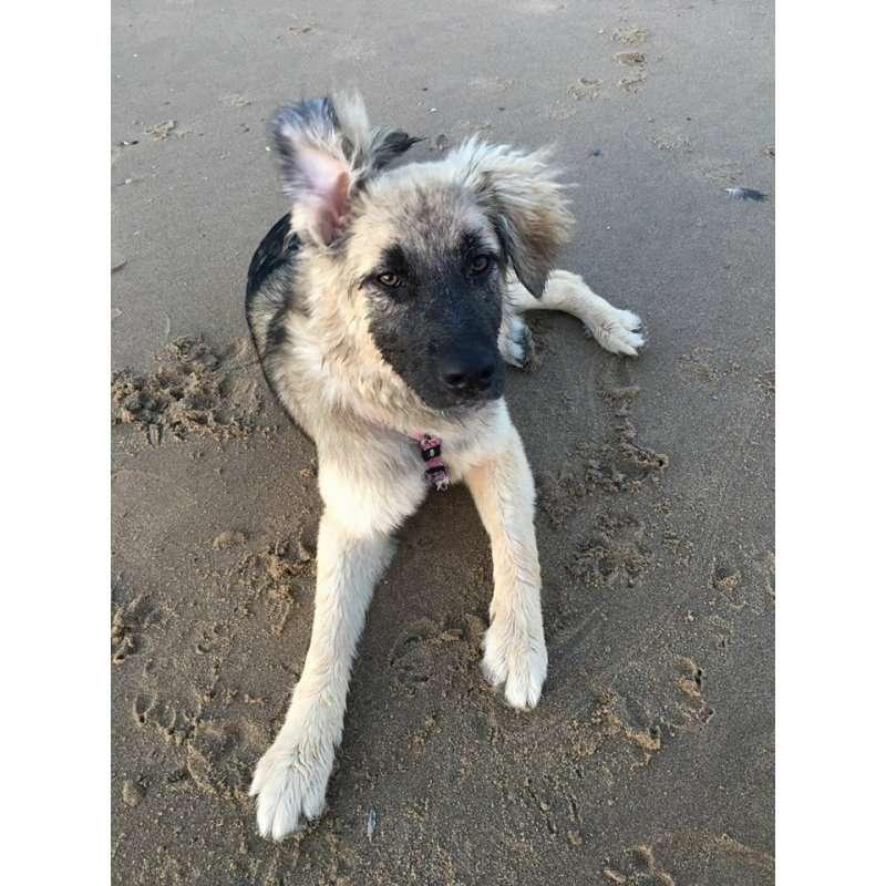 siri-rescue-dogs-romania (1)