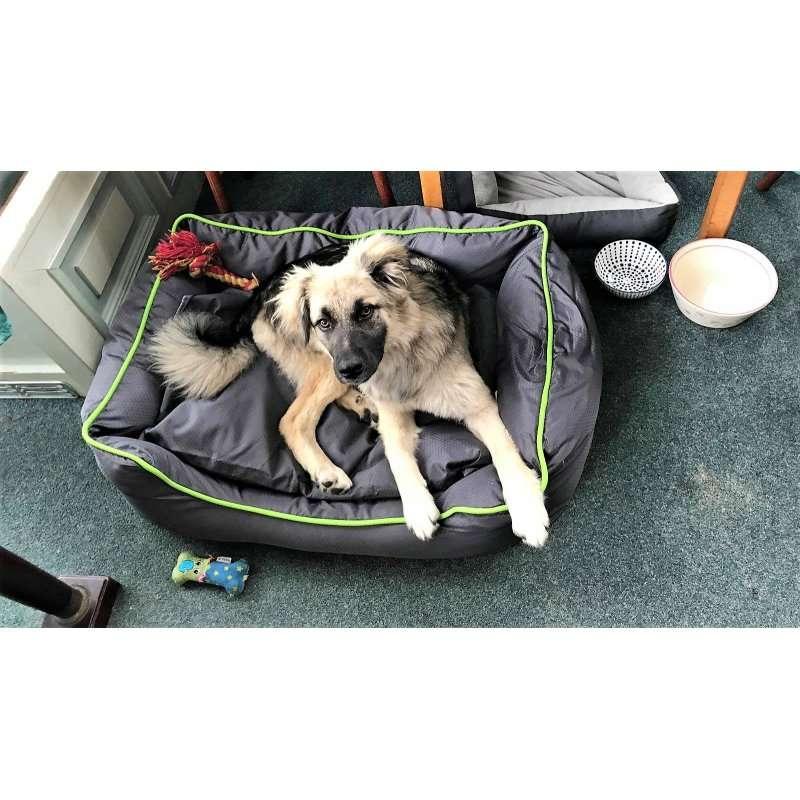siri-rescue-dogs-romania (2)
