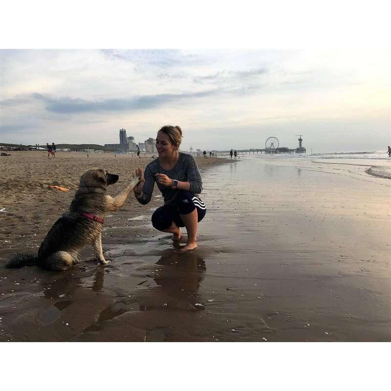 siri-rescue-dogs-romania (4)