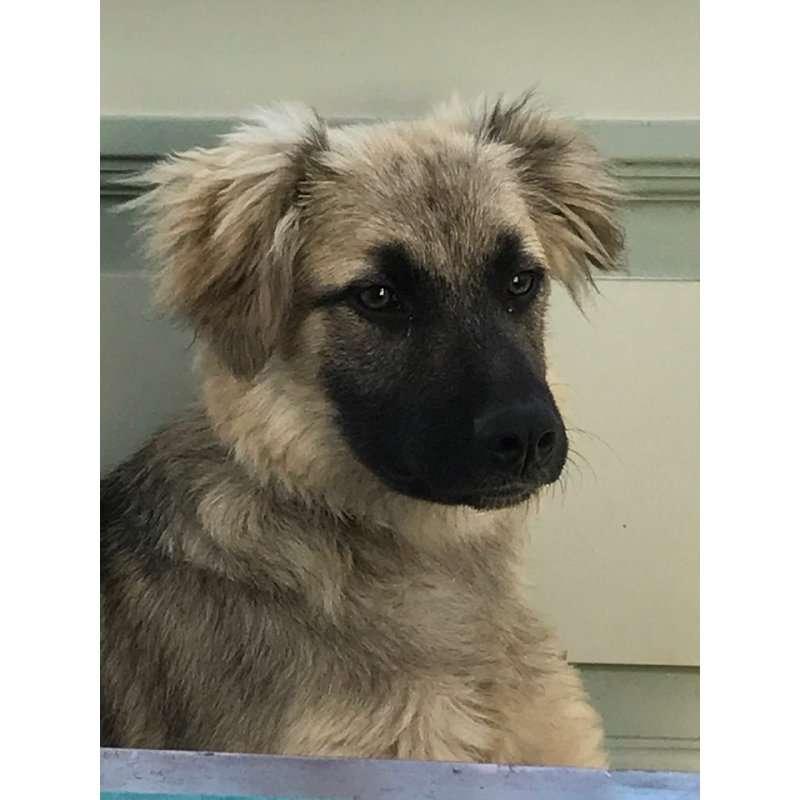 siri-rescue-dogs-romania (6)
