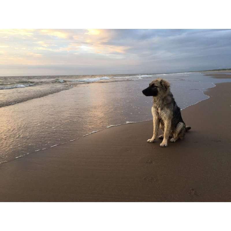 siri-rescue-dogs-romania