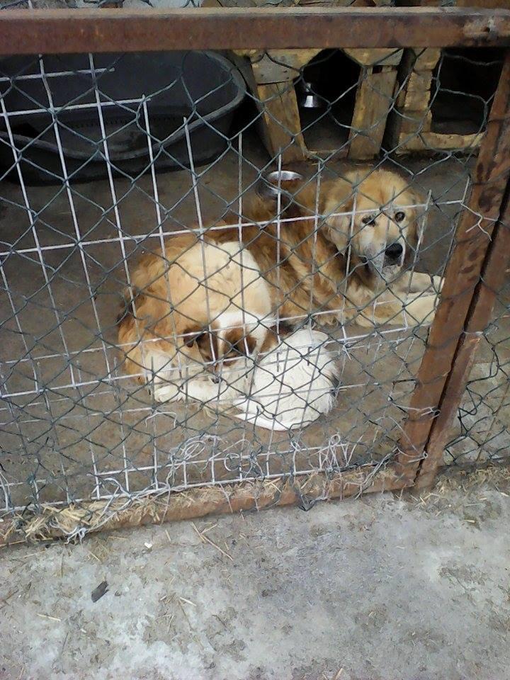 shelter dogsshelter dogs