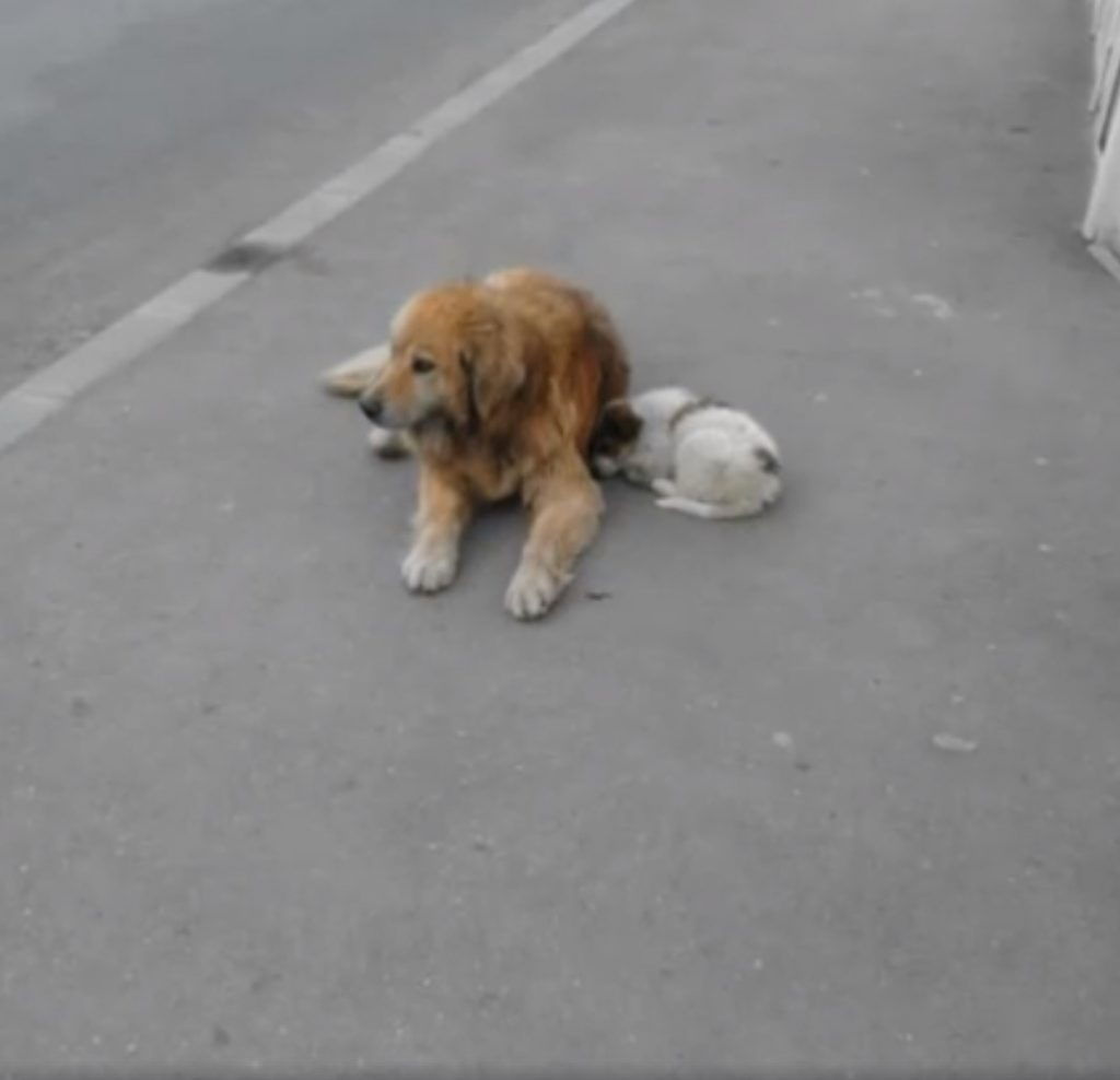 stray old dog with puppy