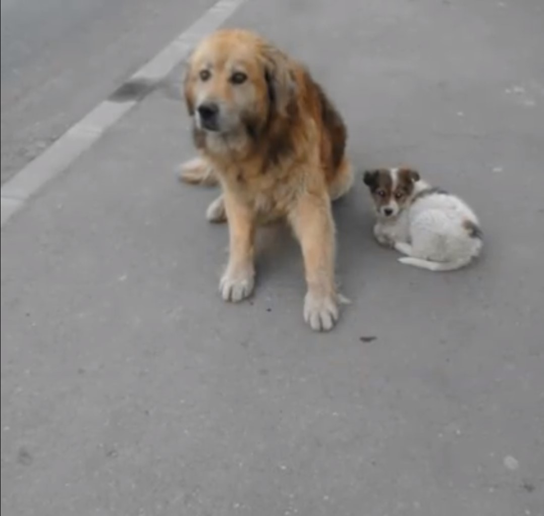 stray dog with puppy
