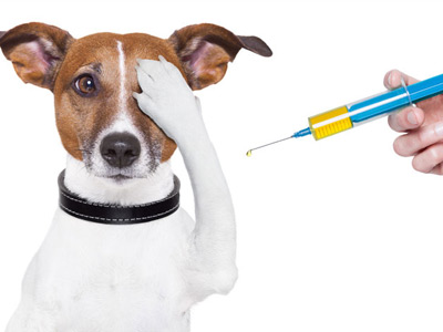 What vaccines are needed dogs