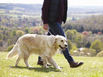 Feeding and walking a new dog