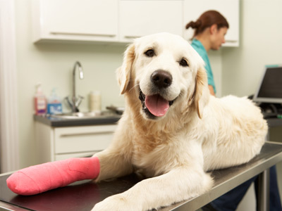 Vetcare for dogs