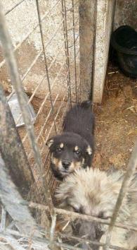 Dog Rescue Romania - The Forgotten Shelter